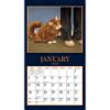 Picture of LANG Wall Calendar 2022 American Cat By Lowell Herrero
