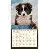Picture of LANG Wall Calendar 2022 Love of Dogs by John Silver